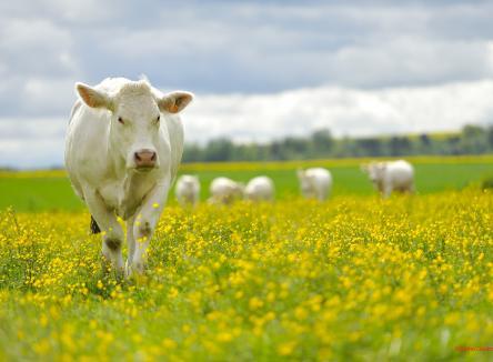 Le Groupe Lactalis s'est associé à la Coopérative laitière de Rouvroy-sur-Audry, dans les Ardennes, qui valorise le lait d'excédent, en créant Canélia